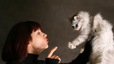 cat scent spray